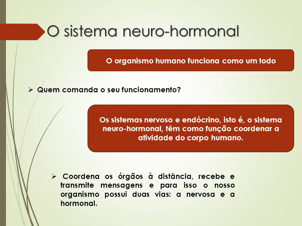 O sistema neuro-hormonal O organismo humano funciona como um todo  Quem comanda o seu funcionamento.