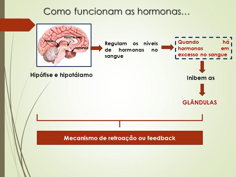 Como funcionam as hormonas… Hipófise e hipotálamo Regulam os níveis de hormonas no sangue Quando há hormonas em excesso no sangue Inibem as GLÂNDULAS Mecanismo de retroação ou feedback
