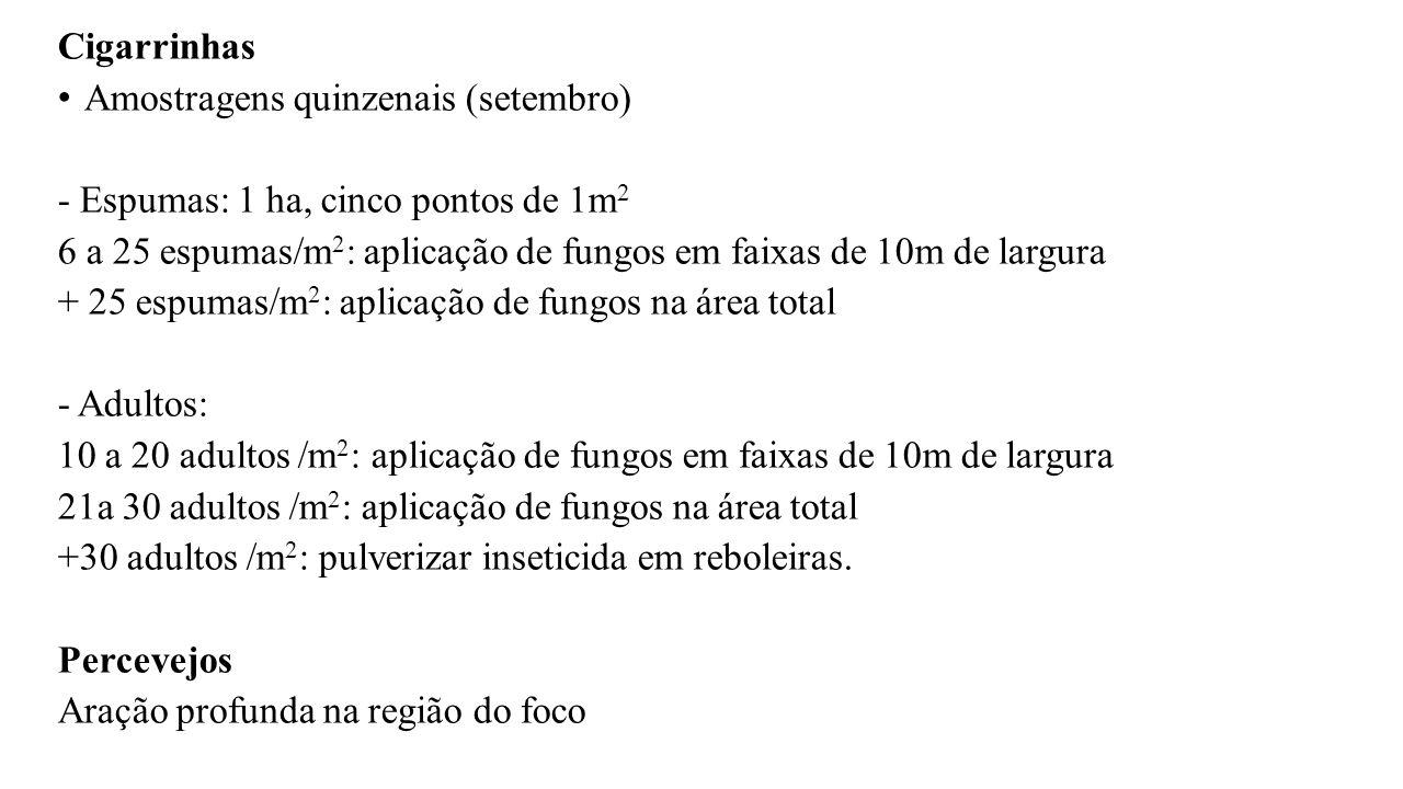 Cigarrinhas Amostragens quinzenais (setembro) - Espumas: 1 ha, cinco pontos de 1m 2 6 a 25 espumas/m 2 : aplicação de fungos em faixas de 10m de largu