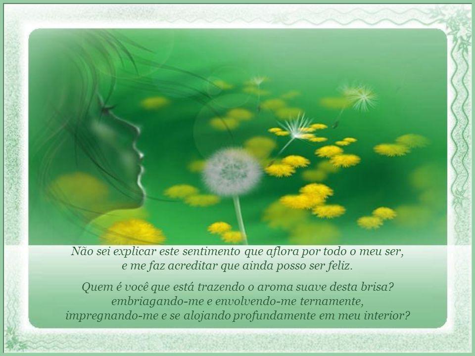 De encontro agora a um sonho inesperado, vejo em meu caminho uma luz, uma luz que me guia, quem sabe, à verdadeira felicidade...