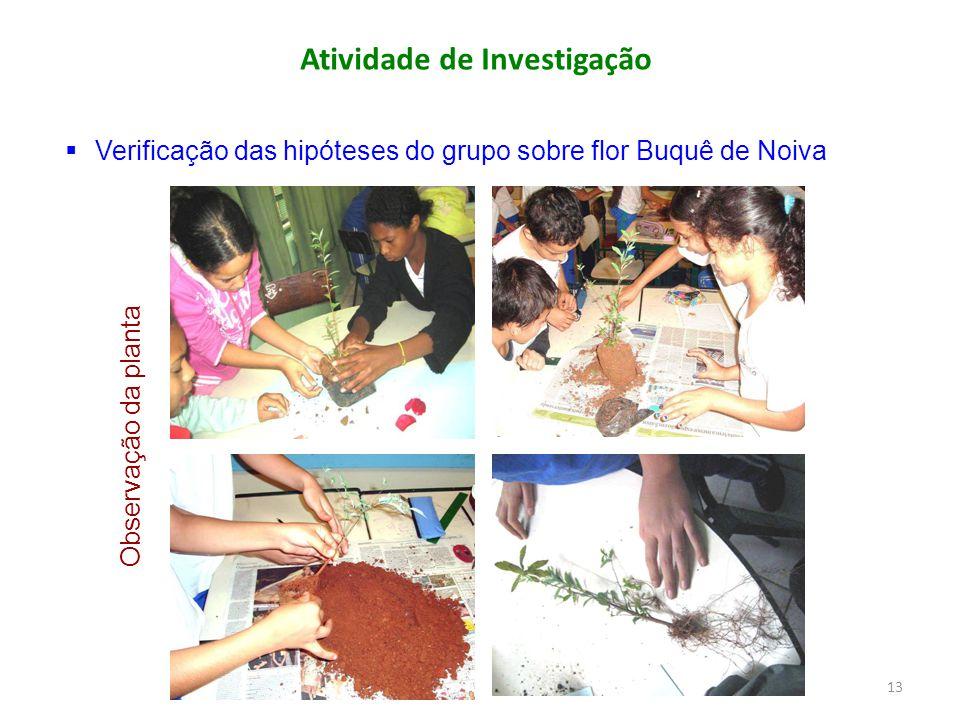 Atividade de Investigação  Verificação das hipóteses do grupo sobre flor Buquê de Noiva Observação da planta 13