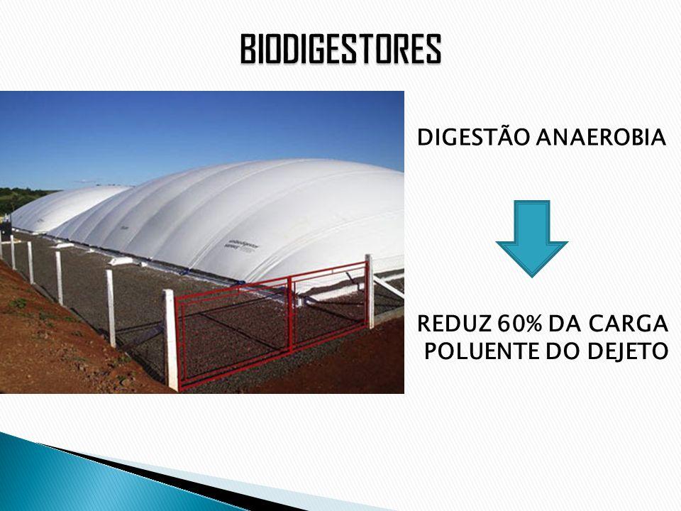 DIGESTÃO ANAEROBIA REDUZ 60% DA CARGA POLUENTE DO DEJETO
