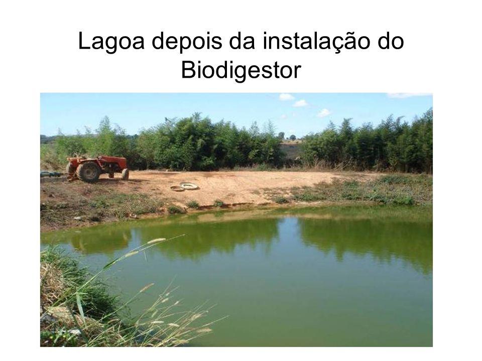 Lagoa depois da instalação do Biodigestor