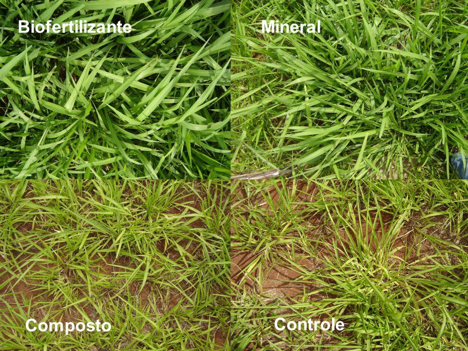Mineral Composto Biofertilizante Controle