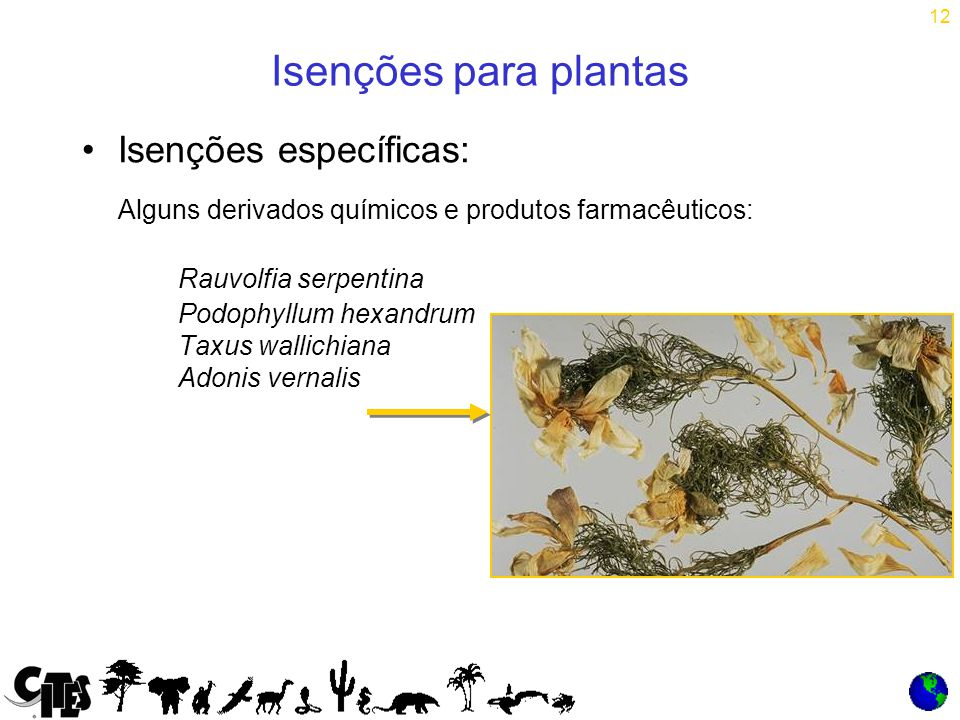 12 Isenções para plantas Isenções específicas: Alguns derivados químicos e produtos farmacêuticos: Rauvolfia serpentina Podophyllum hexandrum Taxus wallichiana Adonis vernalis