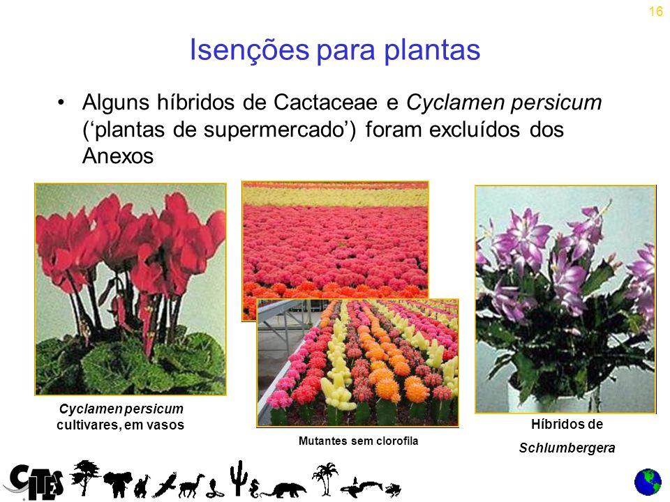 16 Isenções para plantas Alguns híbridos de Cactaceae e Cyclamen persicum ('plantas de supermercado') foram excluídos dos Anexos Cyclamen persicum cultivares, em vasos Mutantes sem clorofila Híbridos de Schlumbergera