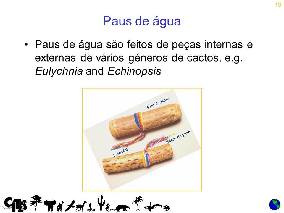 19 Paus de água Paus de água são feitos de peças internas e externas de vários géneros de cactos, e.g.