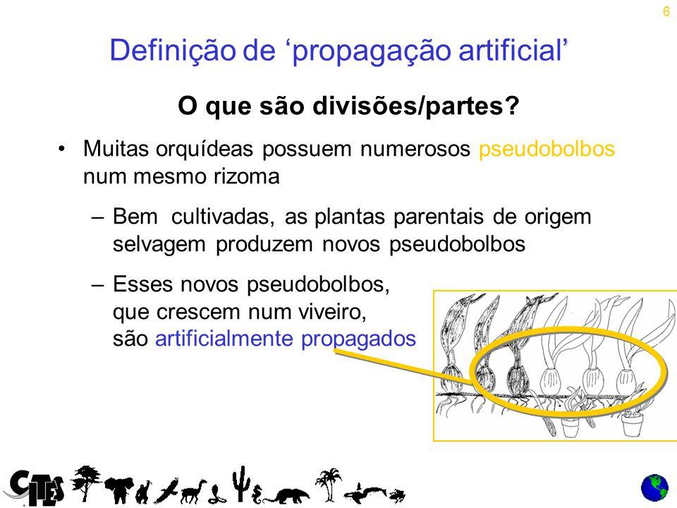 6 O que são divisões/partes.
