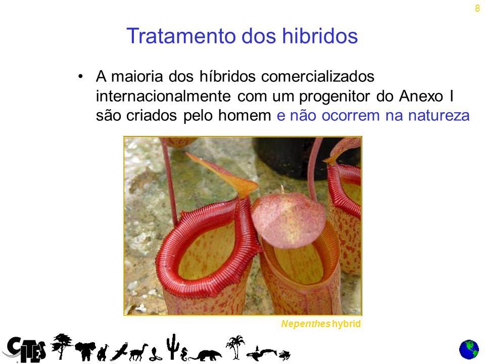 8 Tratamento dos hibridos Nepenthes hybrid A maioria dos híbridos comercializados internacionalmente com um progenitor do Anexo I são criados pelo homem e não ocorrem na natureza