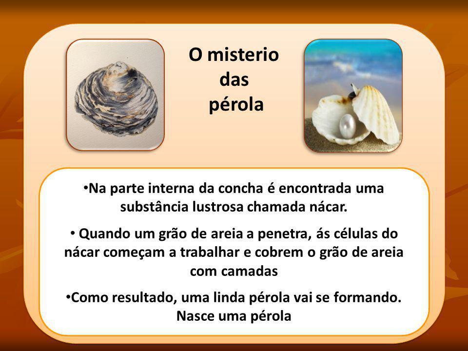 O misterio das pérola O misterio das pérola Na parte interna da concha é encontrada uma substância lustrosa chamada nácar. Quando um grão de areia a p