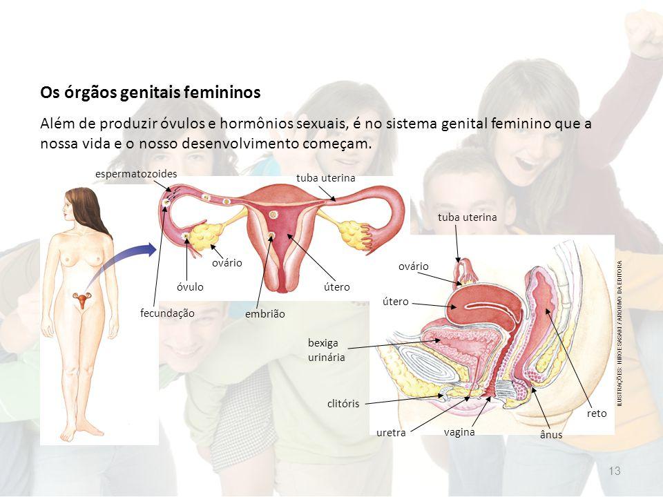 Os órgãos genitais femininos Além de produzir óvulos e hormônios sexuais, é no sistema genital feminino que a nossa vida e o nosso desenvolvimento começam.