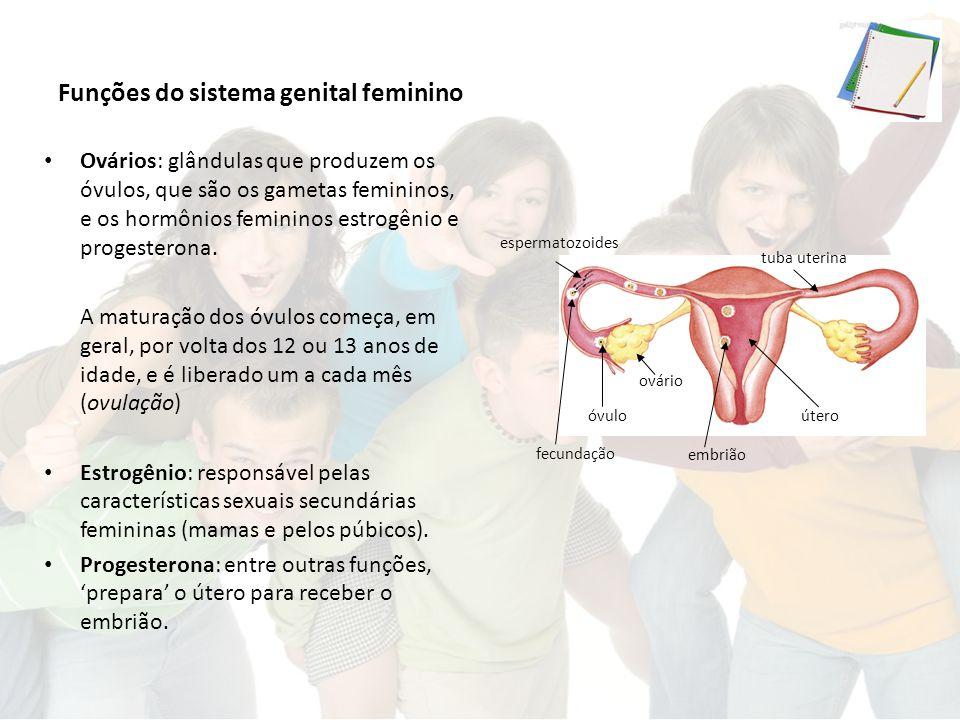 Funções do sistema genital feminino Ovários: glândulas que produzem os óvulos, que são os gametas femininos, e os hormônios femininos estrogênio e progesterona.