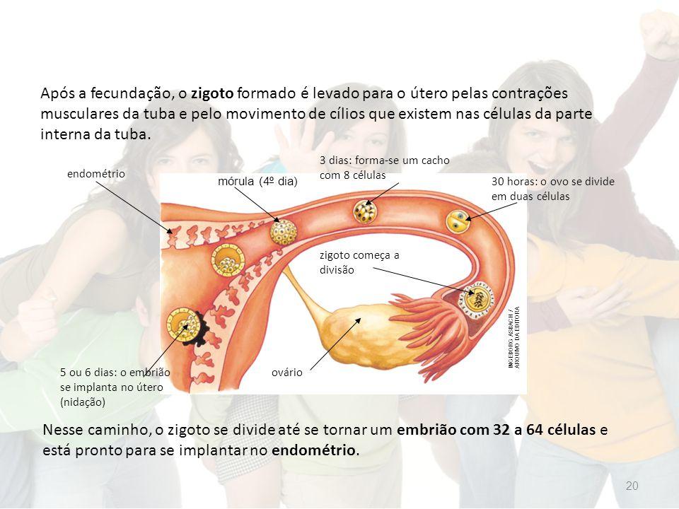Após a fecundação, o zigoto formado é levado para o útero pelas contrações musculares da tuba e pelo movimento de cílios que existem nas células da parte interna da tuba.