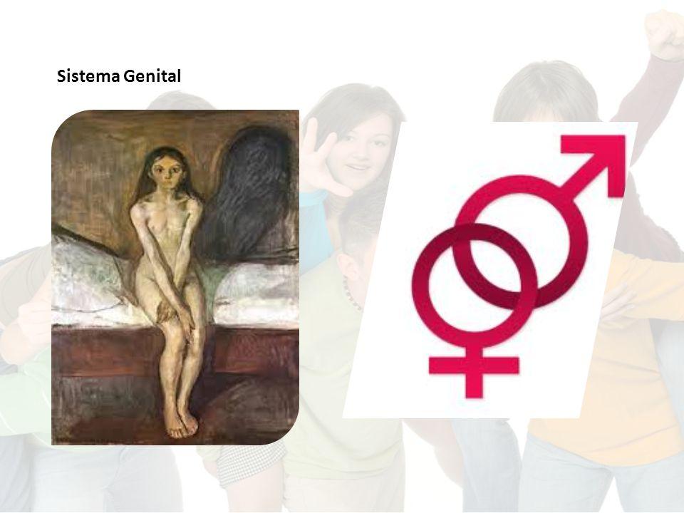 O sistema genital Que diferenças existem entre o sistema genital masculino e o feminino.