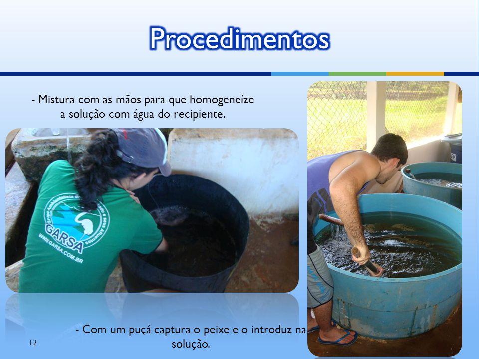 12 - Mistura com as mãos para que homogeneíze a solução com água do recipiente. - Com um puçá captura o peixe e o introduz na solução.