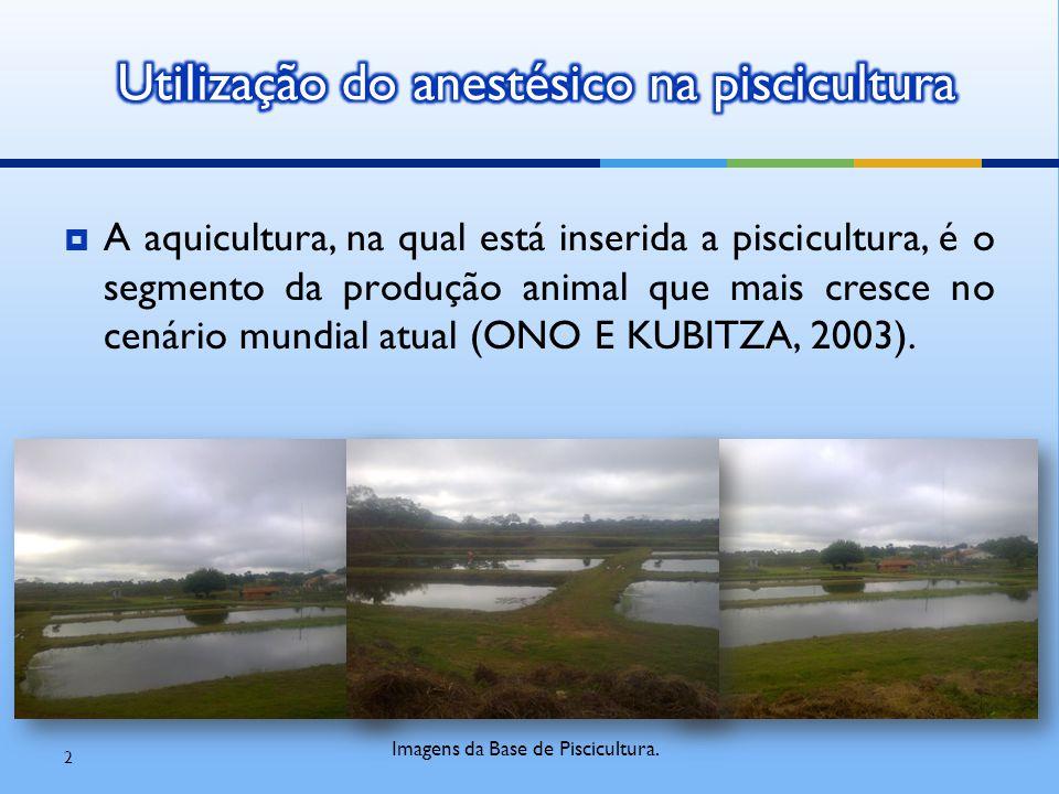  A aquicultura, na qual está inserida a piscicultura, é o segmento da produção animal que mais cresce no cenário mundial atual (ONO E KUBITZA, 2003).