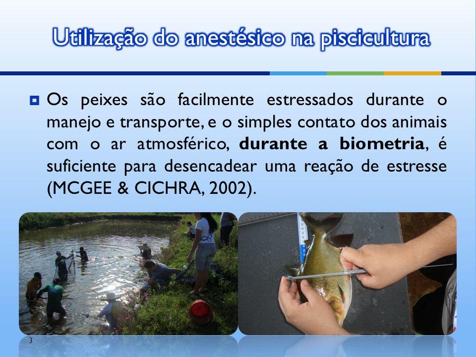 Os peixes são facilmente estressados durante o manejo e transporte, e o simples contato dos animais com o ar atmosférico, durante a biometria, é suf