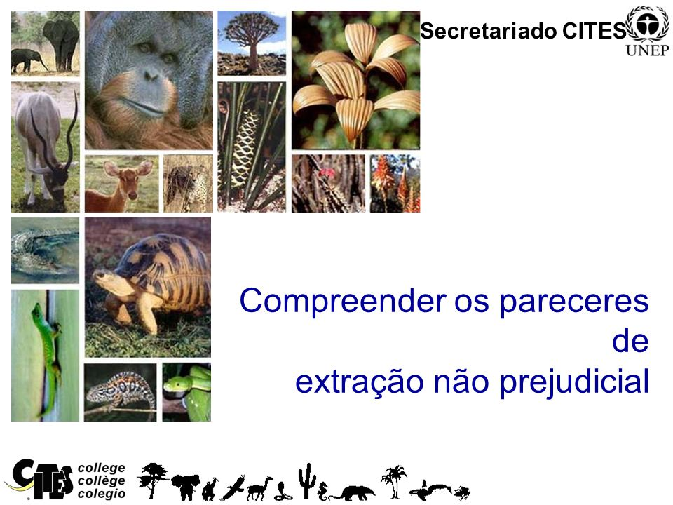 1 Convention on International Trade in Endangered Species of Wild Fauna and Flora Compreender os pareceres de extração não prejudicial Secretariado CI