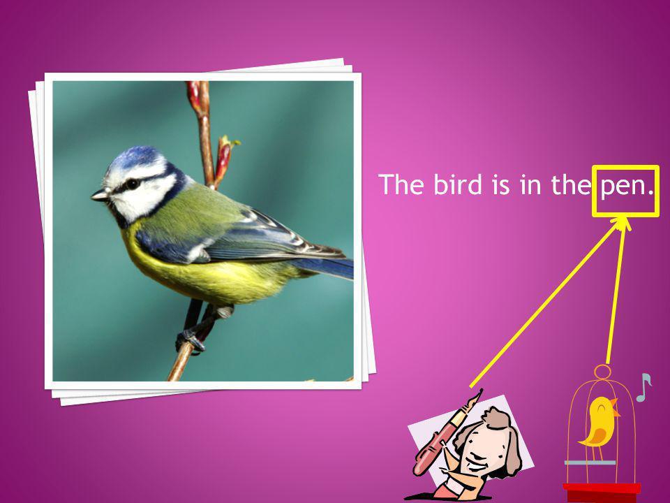 The bird is in the pen.