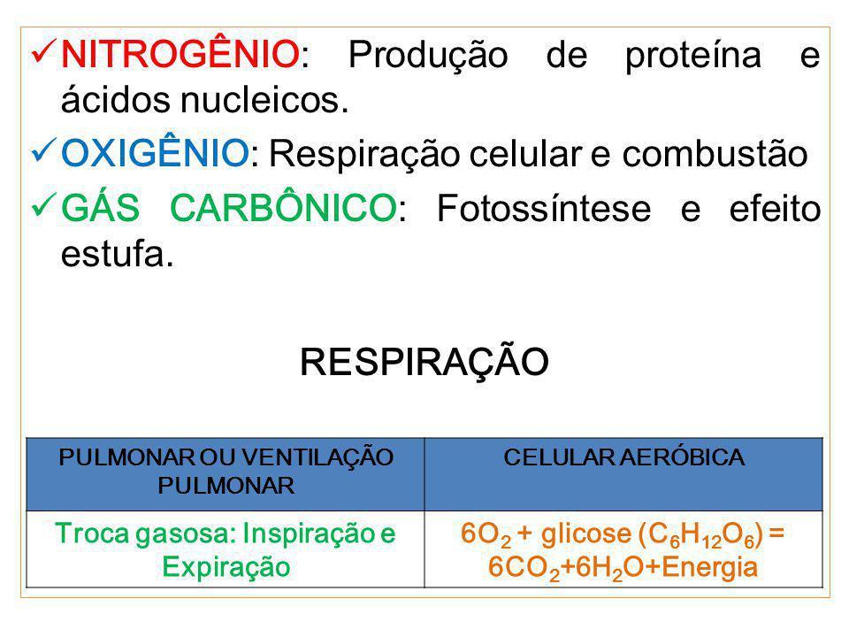 NITROGÊNIO: Produção de proteína e ácidos nucleicos.