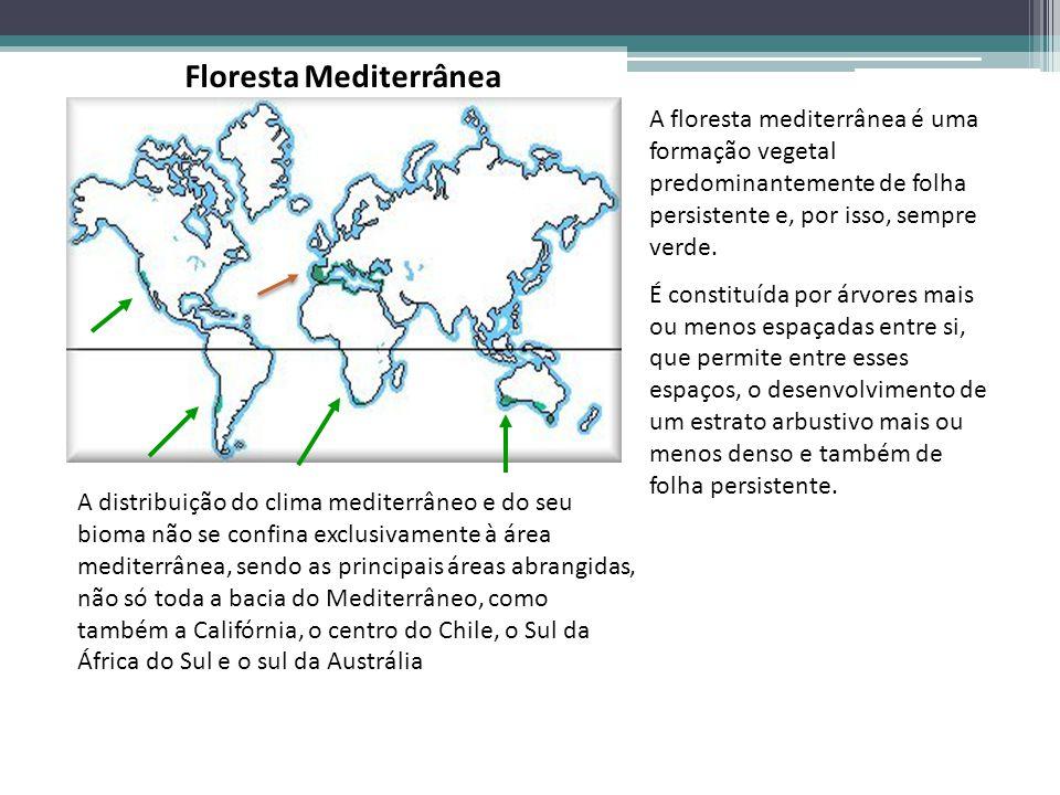 A floresta mediterrânea é uma formação vegetal predominantemente de folha persistente e, por isso, sempre verde. É constituída por árvores mais ou men