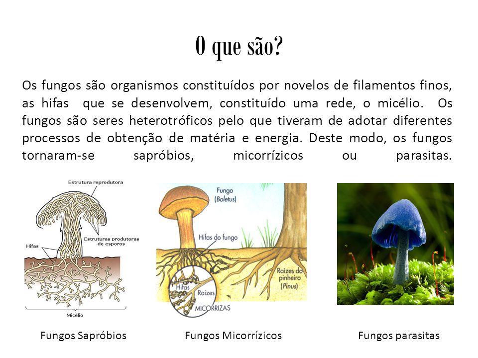 Os Cogumelos Os cogumelos são estruturas macroscópicas produzidas por alguns fungos durante a reprodução sexuada, e que têm uma função semelhante aos frutos, ou seja, a produção, proteção e dispersão dos esporos.