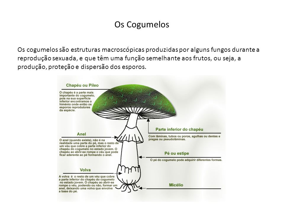 Trabalho de campo; Introdução teórica sobre o tema; Leitura do Livro Verde dos Montados e exploração do site http://info.uevora.pt/cogumelo 1º dia: