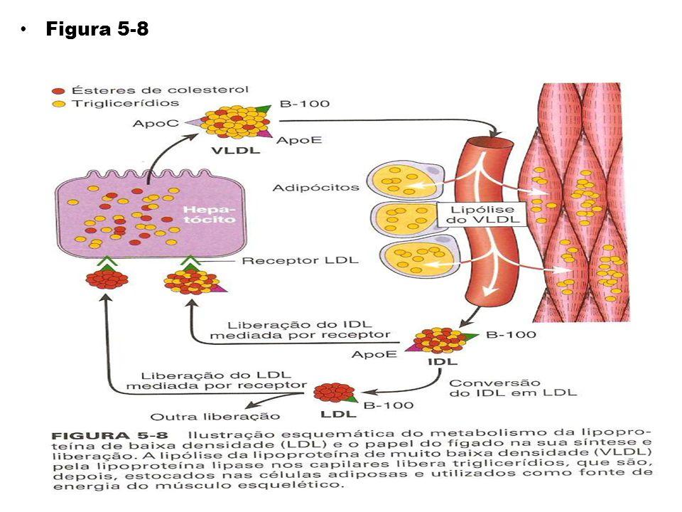 Nos hepatócitos, o IDL é reciclado para gerar VLDL.