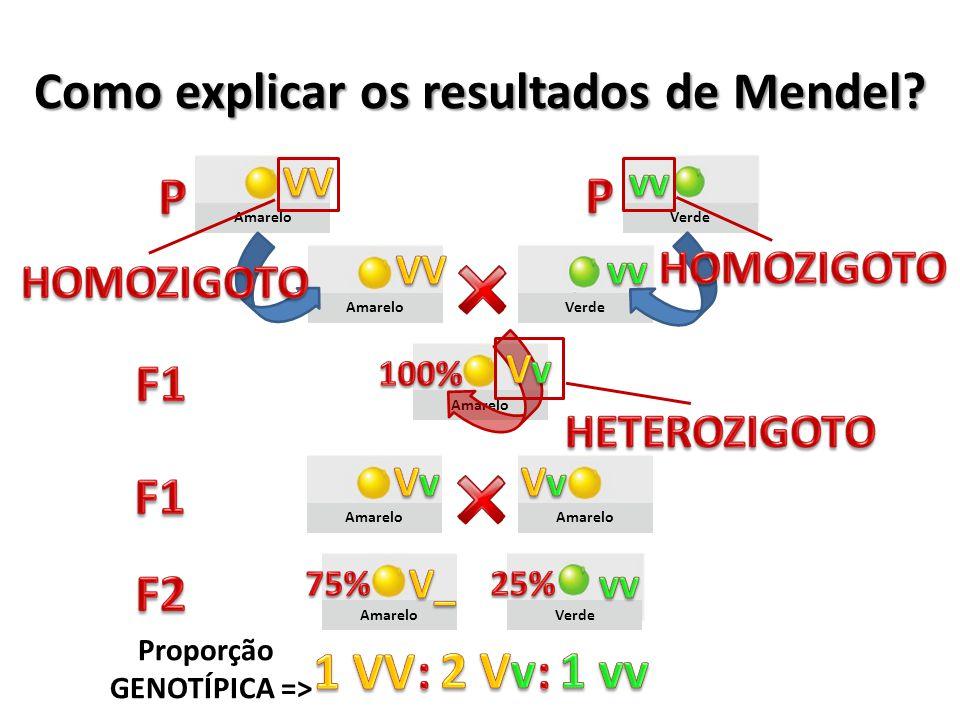 Amarelo Verde Amarelo Verde Como explicar os resultados de Mendel? Proporção GENOTÍPICA =>