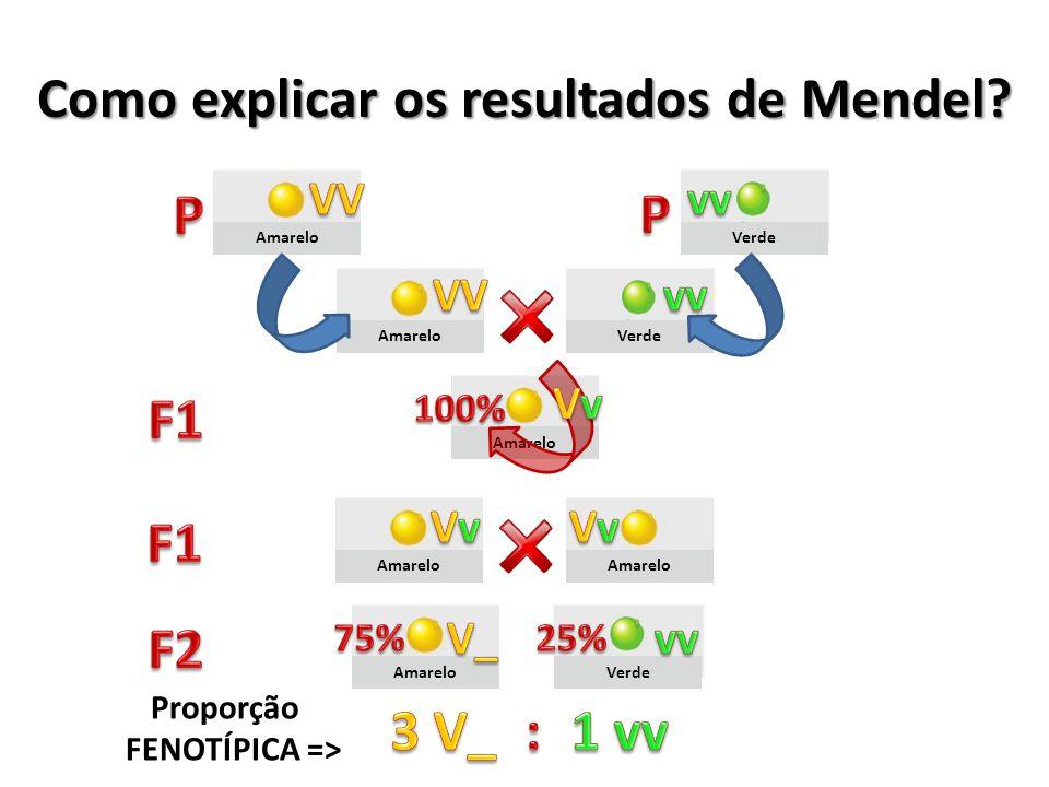 Amarelo Verde Amarelo Verde Como explicar os resultados de Mendel? Proporção FENOTÍPICA =>