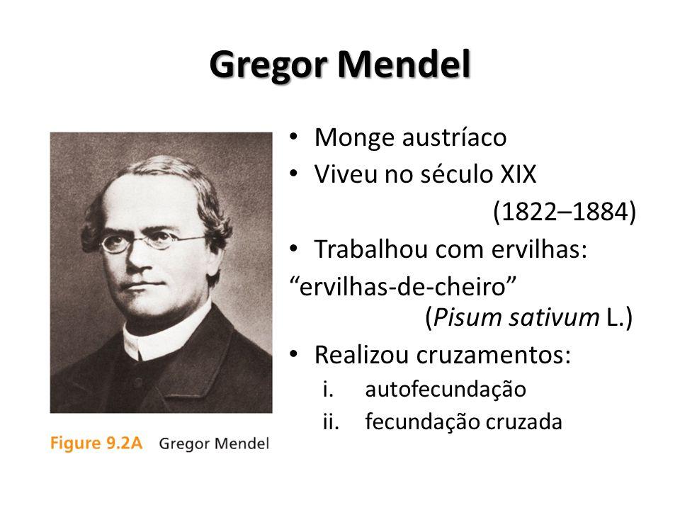 """Gregor Mendel Monge austríaco Viveu no século XIX (1822–1884) Trabalhou com ervilhas: """"ervilhas-de-cheiro"""" (Pisum sativum L.) Realizou cruzamentos: i."""