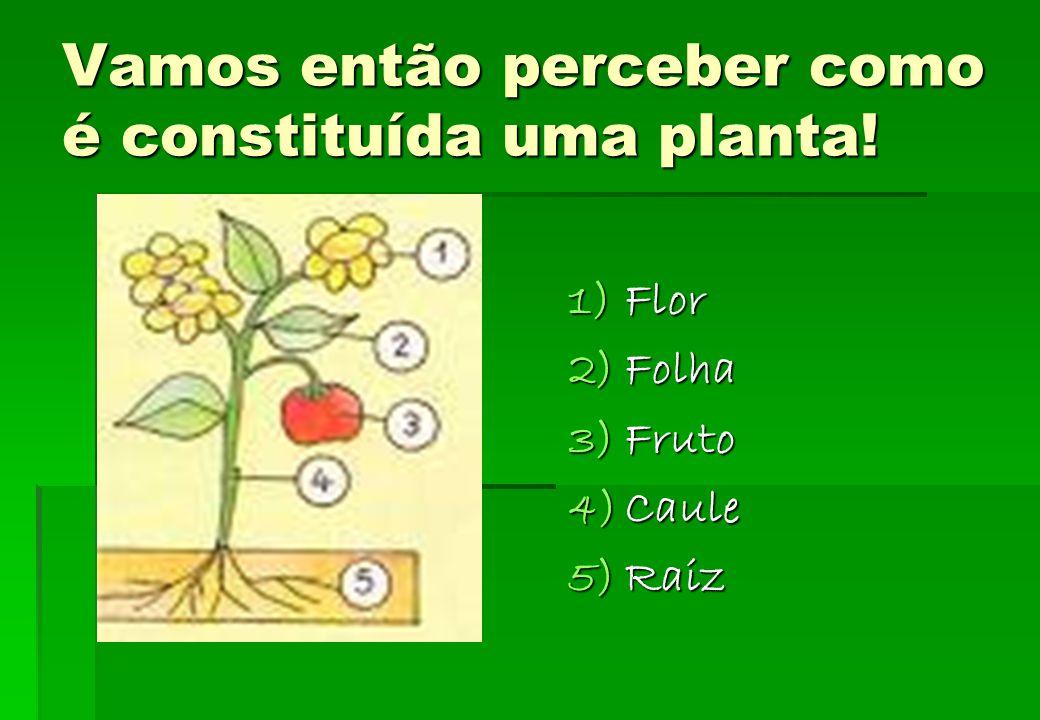 A utilidade das plantas Plantas Perfumaria e decoração Mobiliário e construção VestuárioMedicação Pasta de papel