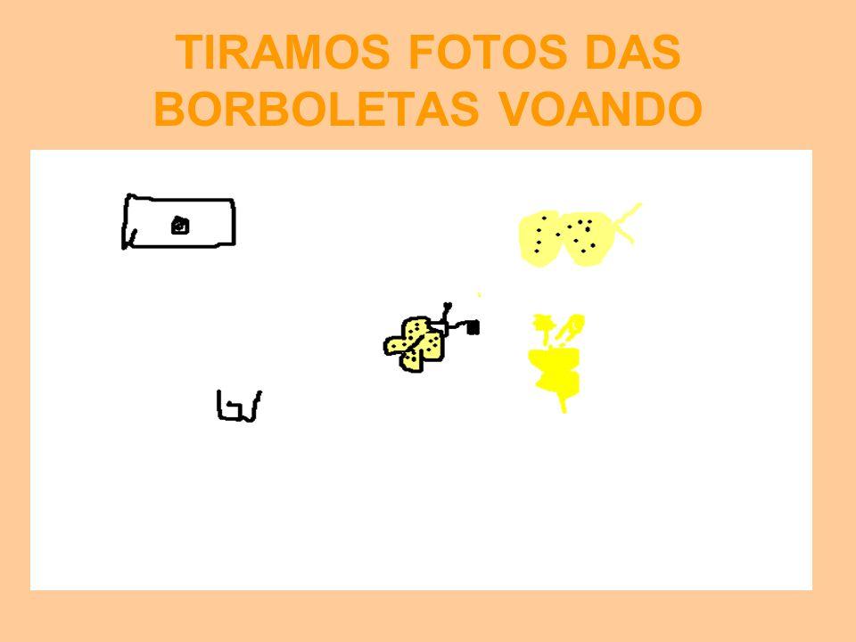 TIRAMOS FOTOS DAS BORBOLETAS VOANDO