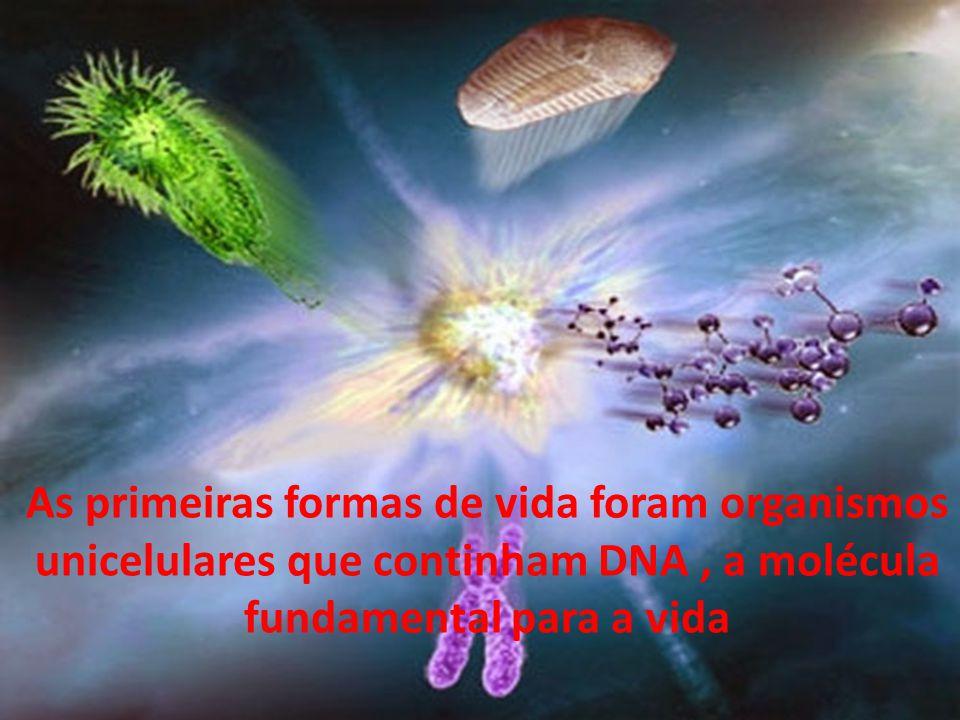 As primeiras formas de vida foram organismos unicelulares que continham DNA, a molécula fundamental para a vida