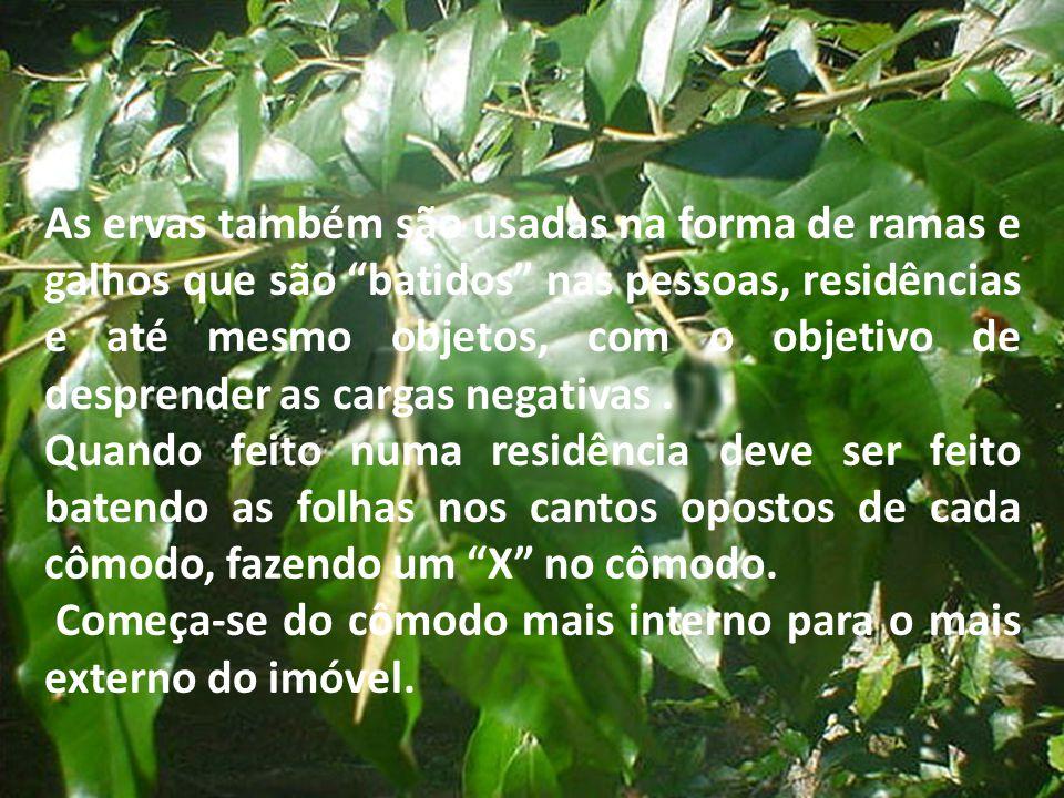"""As ervas também são usadas na forma de ramas e galhos que são """"batidos"""" nas pessoas, residências e até mesmo objetos, com o objetivo de desprender as"""