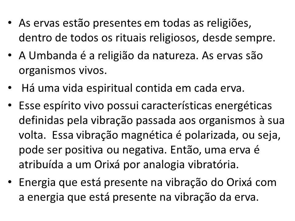 As ervas estão presentes em todas as religiões, dentro de todos os rituais religiosos, desde sempre. A Umbanda é a religião da natureza. As ervas são