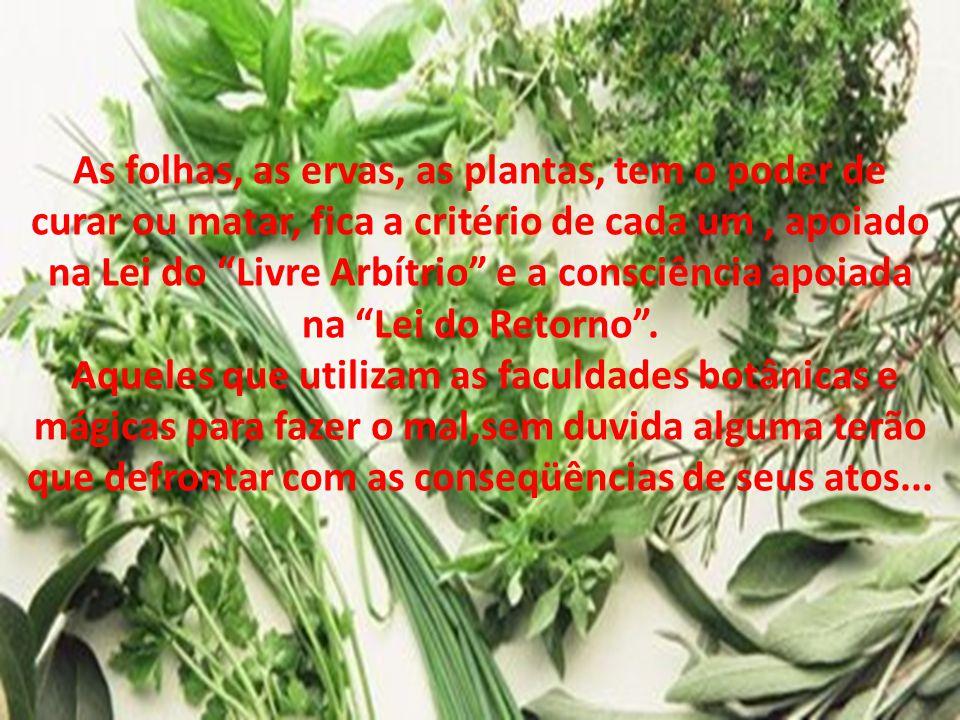 """As folhas, as ervas, as plantas, tem o poder de curar ou matar, fica a critério de cada um, apoiado na Lei do """"Livre Arbítrio"""" e a consciência apoiada"""