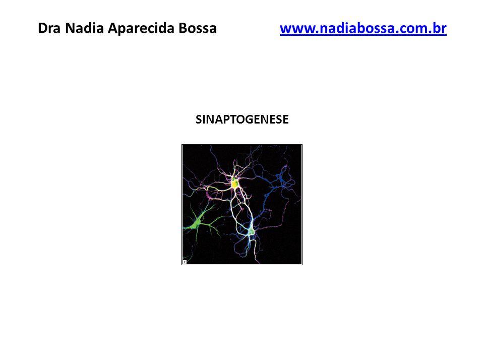 SINAPTOGENESE Dra Nadia Aparecida Bossawww.nadiabossa.com.brwww.nadiabossa.com.br
