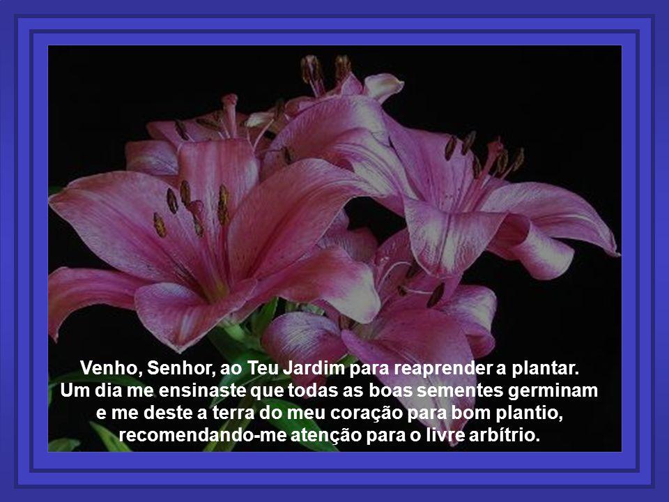Venho, Senhor, ao Teu Jardim para reaprender a plantar. Um dia me ensinaste que todas as boas sementes germinam e me deste a terra do meu coração para