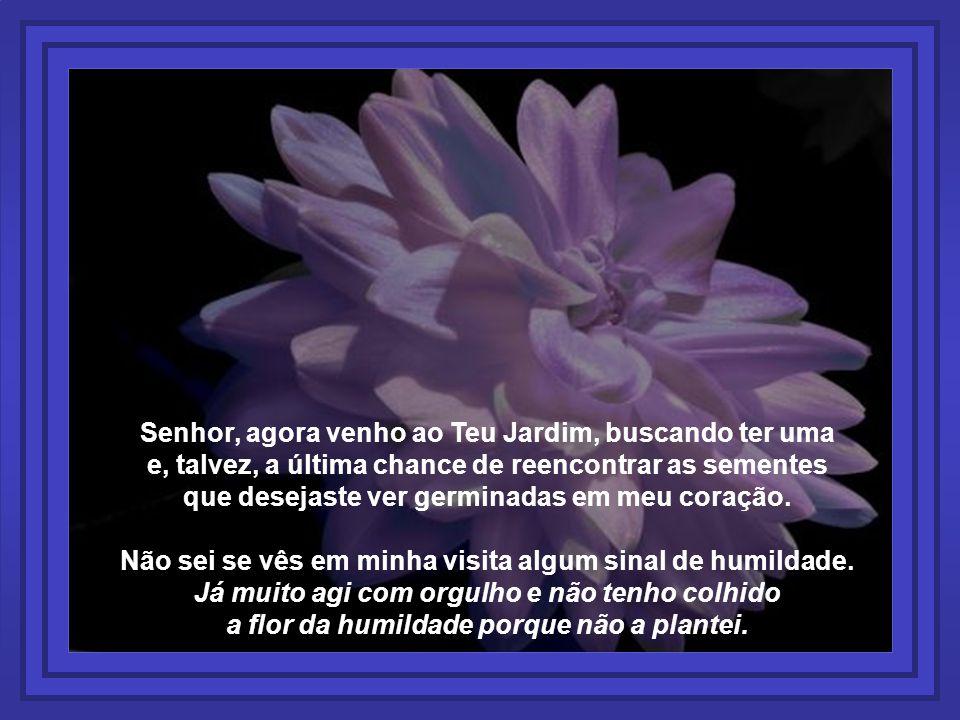 Senhor, agora venho ao Teu Jardim, buscando ter uma e, talvez, a última chance de reencontrar as sementes que desejaste ver germinadas em meu coração.