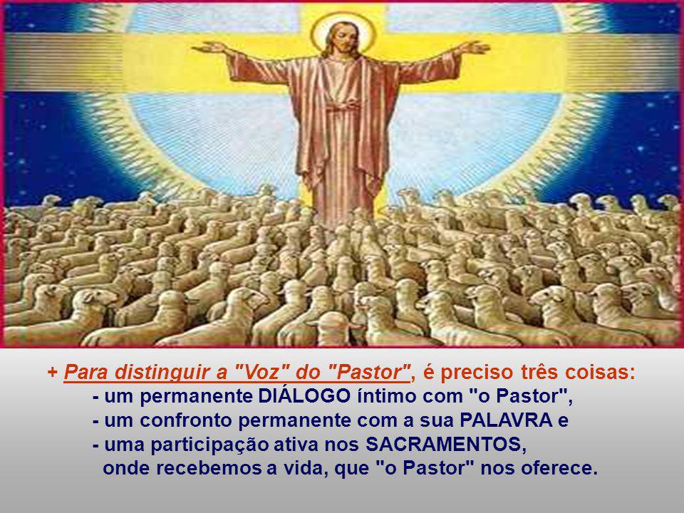 Nas comunidades cristãs, temos pessoas que presidem e animam. - Aceitamos as pessoas que receberam essa missão de Cristo e da Igreja, apesar dos seus