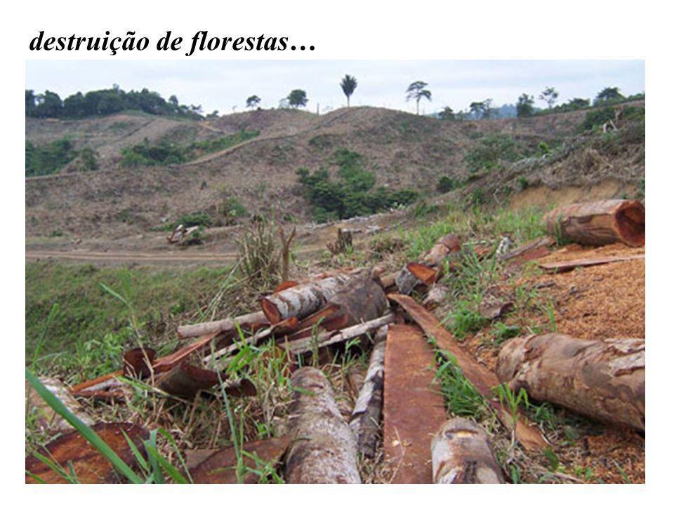 destruição de florestas…
