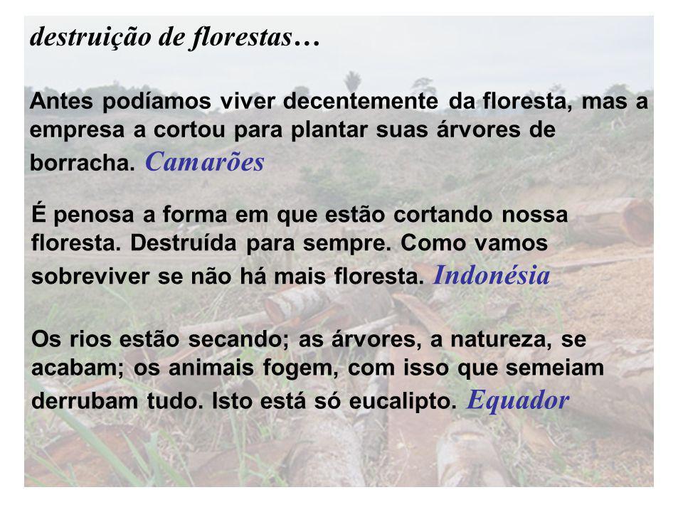 Antes podíamos viver decentemente da floresta, mas a empresa a cortou para plantar suas árvores de borracha. Camarões Os rios estão secando; as árvore