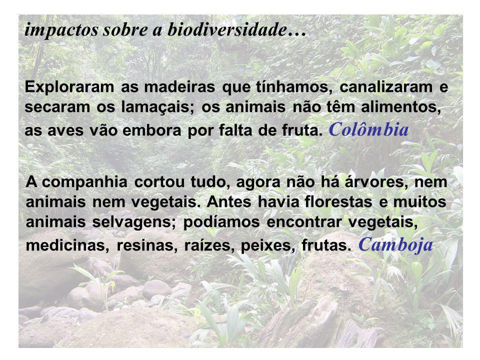 Exploraram as madeiras que tínhamos, canalizaram e secaram os lamaçais; os animais não têm alimentos, as aves vão embora por falta de fruta.