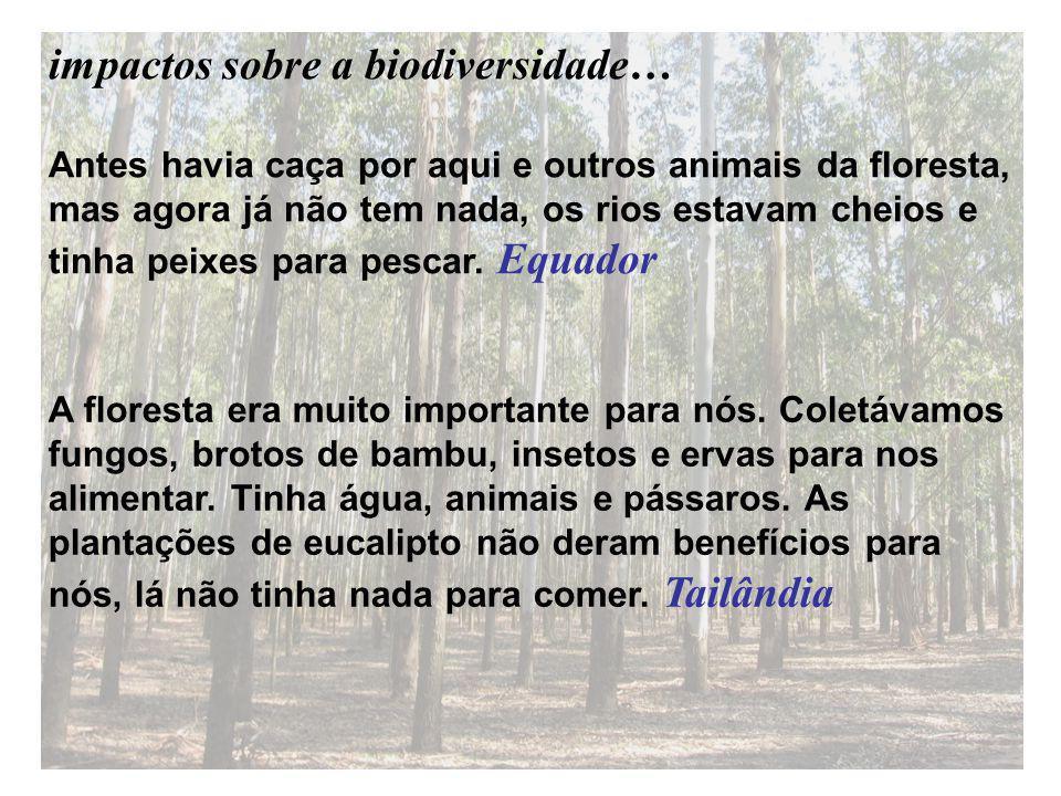 Antes havia caça por aqui e outros animais da floresta, mas agora já não tem nada, os rios estavam cheios e tinha peixes para pescar.