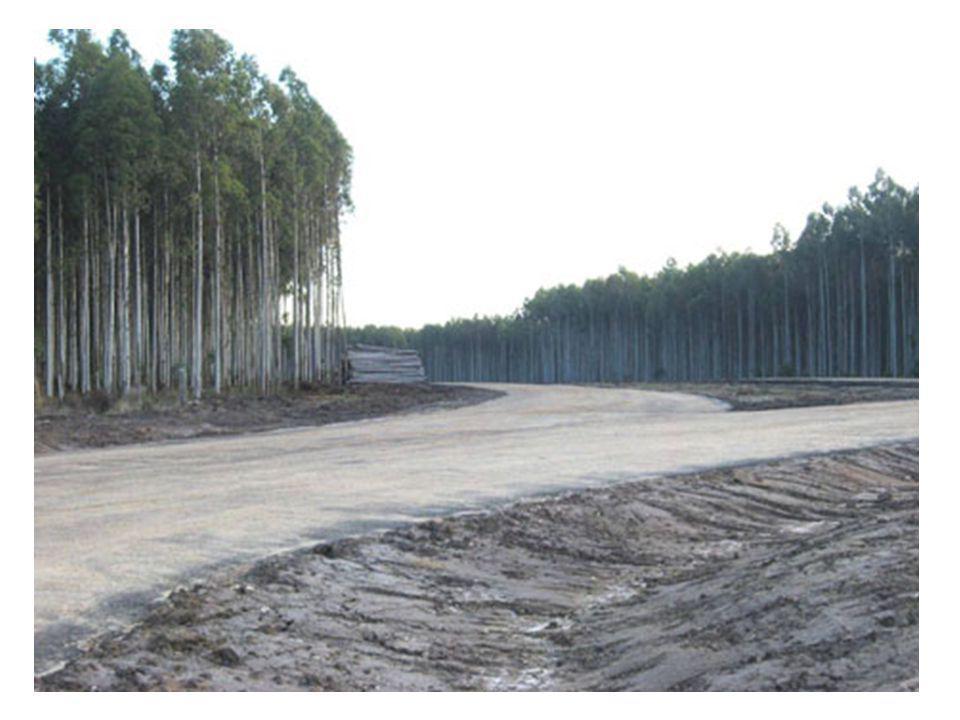 As monoculturas de árvores provocam graves impactos nas comunidades onde são instaladas: - esgotam as fontes e cursos de água locais - destroem amplas superfícies de floresta - grandes empresas nacionais e estrangeiras ocupam enormes áreas de terras que serviam de sustento a populações locais