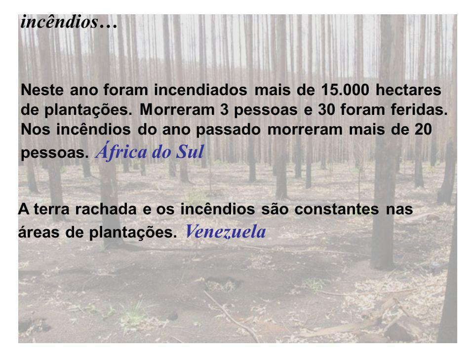 Neste ano foram incendiados mais de 15.000 hectares de plantações.