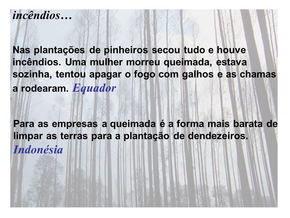Nas plantações de pinheiros secou tudo e houve incêndios.