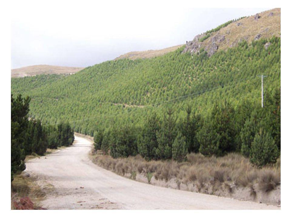 - agrocombustíveis - sumidouros de carbono - etanol celulósico - árvores transgênicas