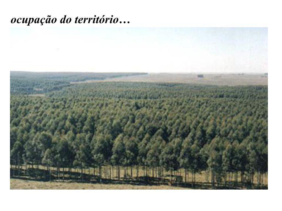 Ocupam grandes extensões de terra que poderiam ser usadas para a produção de alimentos pelas famílias que esperam a reforma agrária.